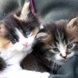 Les 20 plus beaux chats de Wamiz, ce sont eux ! (photos)
