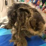 La métamorphose de Dori, pauvre petite chienne laissée pour morte dans une cave
