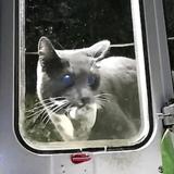 Il invente une chatière connectée pour empêcher son chat de rentrer avec des animaux morts !