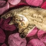Les chats et les huiles essentielles : un mariage malheureux !