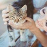 Comment réhabituer mon chat à moins de présence après les vacances ?