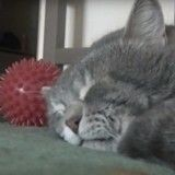 La drôle de réaction de ce chat ensommeillé… lorsque son maître tousse (Vidéo du jour)