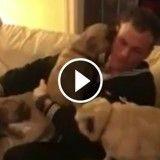 Regardez comme ces chiens sont devenus fous de joie lorsque leur maître militaire est rentré à la maison (Vidéo du jour)