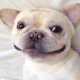 Voici Milo, le chien le plus mignon d'Internet
