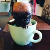 Ce minuscule chiot Bouledogue Français a été abandonné pour une raison très cruelle
