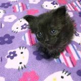 Ils sauvent un minuscule chaton, 3 mois plus tard personne n'en croit ses yeux