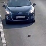 Un automobiliste risque sa vie pour sauver celle d'un chaton (Vidéo du jour)