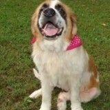 Une chienne volée retrouve sa famille 5 ans après sa disparition
