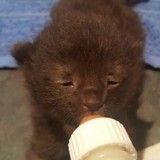 Ce chaton nouveau-né jeté à la poubelle se bat pour sa vie (Photos)