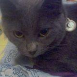 Miyu, le chat héroïque qui a sauvé toute sa famille lors de Thanksgiving