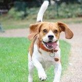 20 fois où MJ le Beagle star du Web s'est montré plus sportif que vous