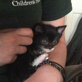 Un jeune couple trouve un chaton abandonné, ce qu'ils font ensuite va vous réchauffer le cœur