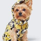 Vous pourrez bientôt habiller votre chien chez H&M !