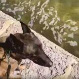 Le chien de police renifle l'eau de la rivière : en voyant ce qui s'y cache, le policier ouvre grand les yeux !