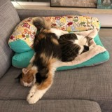 Ce chaton a trouvé un autre chat comme lui et ne le quitte pas ! (Vidéo)