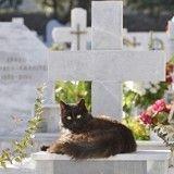 Des chats veillent sur une tombe et provoquent la plus folle des rumeurs (Vidéo)