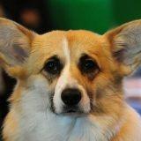 La reine d'Angleterre pleure son chien Monty, décédé à l'âge de 13 ans