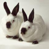 Inséparables, deux lapins trouvent enfin une famille après avoir passé leur vie en refuge