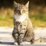 Un chat retrouvé sain et sauf cinq ans après sa disparition