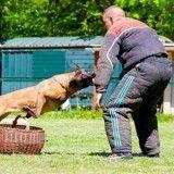 Une enquête de One Voice dénonce la « torture » subie par les chiens dits de défense (Vidéo)