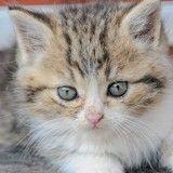 Coincé sous un moteur, un chaton fait 650 km avant de retrouver sa maison grâce à un covoiturage