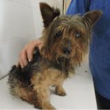 Volé en Guyane, un chien est miraculeusement retrouvé à 7000 km de là !