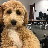 Ce chien de service a une réaction adorable lorsque sa maman l'appelle de l'hôpital (Vidéo)