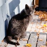 Il rentre chez lui et ne voit pas son chat : la fourrière est venue le capturer et a fait l'impensable