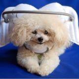 Elle transforme les chiens aveugles en anges à 4 pattes