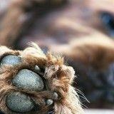 Un chien meurt après avoir sauvé sa maîtresse de l'attaque d'un homme armé
