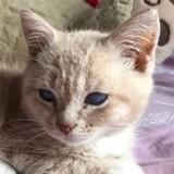 Un chaton est emmené chez le vétérinaire : il l'examine et comprend qu'il est face à un cas jamais vu !