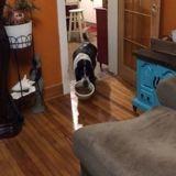 Elle remplit la gamelle de croquettes : quand elle voit ce qu'en fait le chien, elle écarquille les yeux ! (Vidéo)