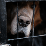 """""""Des chiens, des bennes, des crânes"""" : les enquêteurs de la SPA sont sous le choc en entrant dans une propriété"""