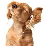La musique relaxe-t-elle les chiens ?