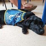Nakao, le futur chien guide d'aveugle et fier membre de la team Wamiz