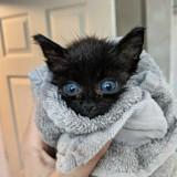 Ce chaton rescapé a changé de couleur au fil des semaines pour une raison improbable !