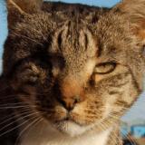 Les 9 vies de Nelson, sacré chat de l'année en Grande-Bretagne