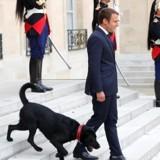 Nemo, le chien d'Emmanuel Macron, un danger pour les canards de l'Elysée ?