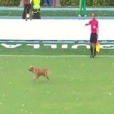 Un chien interrompt Neymar en plein match (Vidéo)