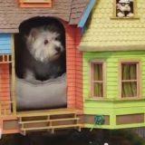 Réplique de la maison du film Là-Haut, cette niche pour chien est une merveille !