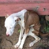 Ce chien a été abandonné durant trois mois dans un jardin sans aucune nourriture