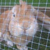 Offrir un vrai lapin pour Pâques, une bonne idée ?