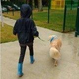 Après 3 ans de combat juridique, bientôt l'école pour Noah et Glinka la chienne d'assistance ?