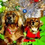 Le Noël des animaux abandonnés