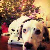 Livre animaux : 5 idées cadeaux pour Noël !