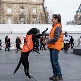 Le Noël des Animaux de la SPA, c'est ce week-end place de la République à Paris !