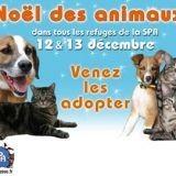La SPA fête le Noël des animaux !