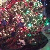 Miracle de Noël : après son sauvetage, une chatte pose un adorable cadeau au pied du sapin de sa sauveuse