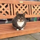 Le 1er chat arrivé dans ce refuge refuse d'en partir tant il s'y sent bien