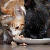 Edito : en fait-on trop avec l'alimentation pour animaux ?